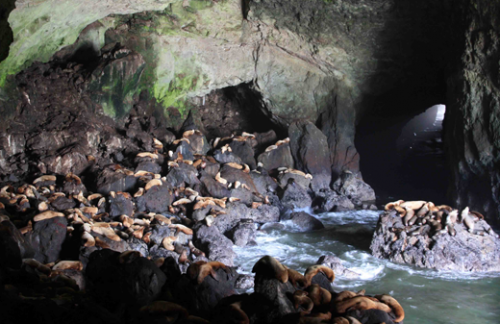 sea-lion-caves
